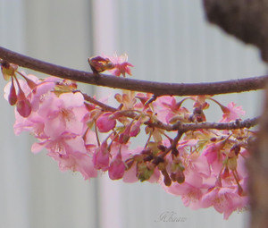 Img_8834t_1