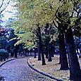 世田谷公園の紅葉