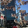 桜とビルと