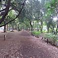 公園の森の道