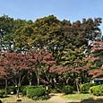 色づき始めた公園の木々