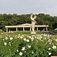 神代植物公園のバラ園