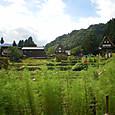 五箇山 稲刈・秋の景色